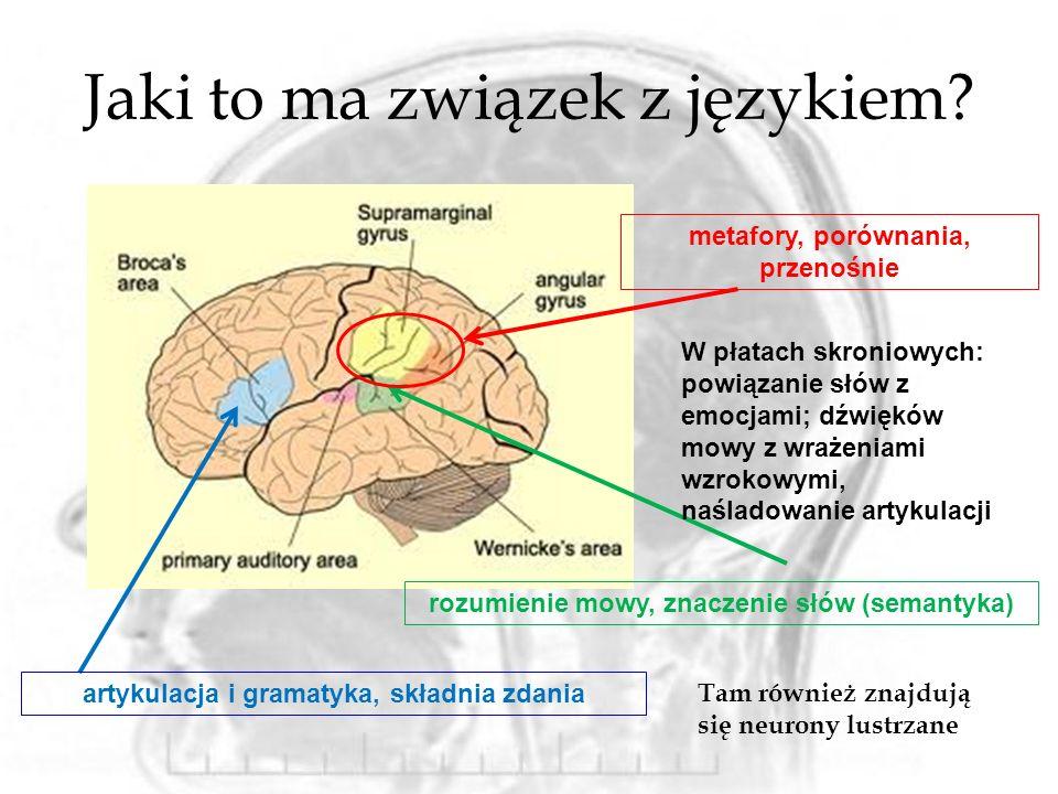 Jaki to ma związek z językiem? artykulacja i gramatyka, składnia zdania metafory, porównania, przenośnie rozumienie mowy, znaczenie słów (semantyka) W