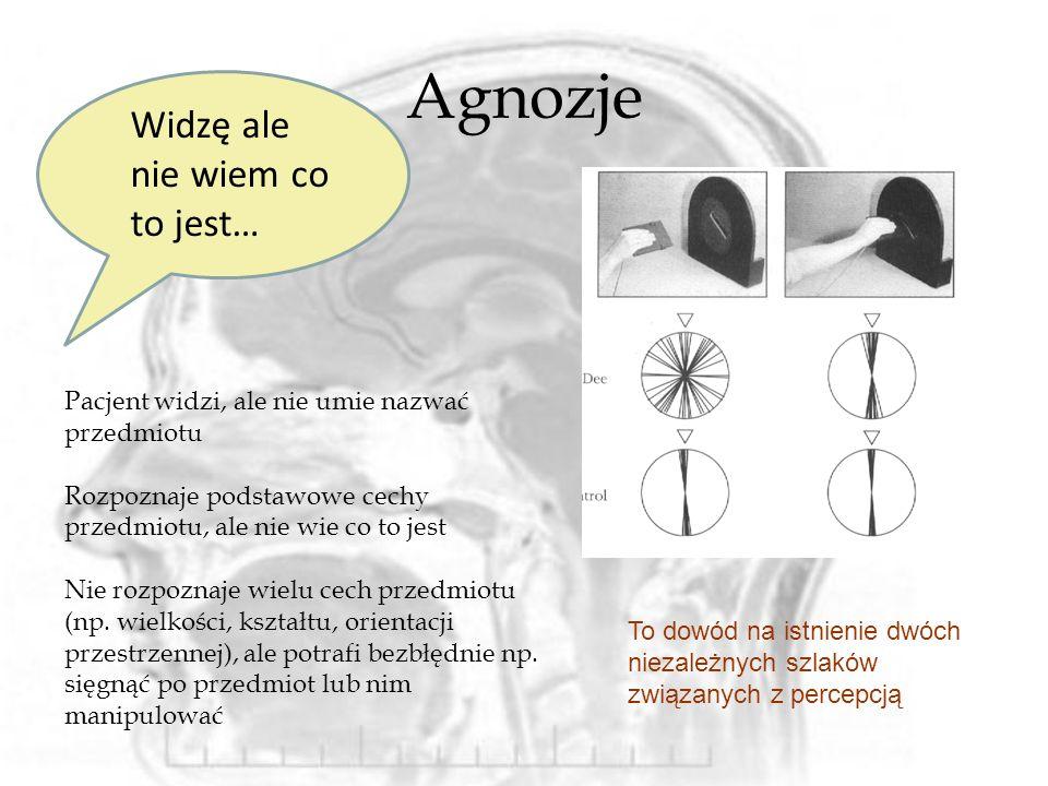 Układ limbiczny – mózg emocjonalny Trzeci szlak: czyli analiza emocjonalna tego co widzimy i co z tego?