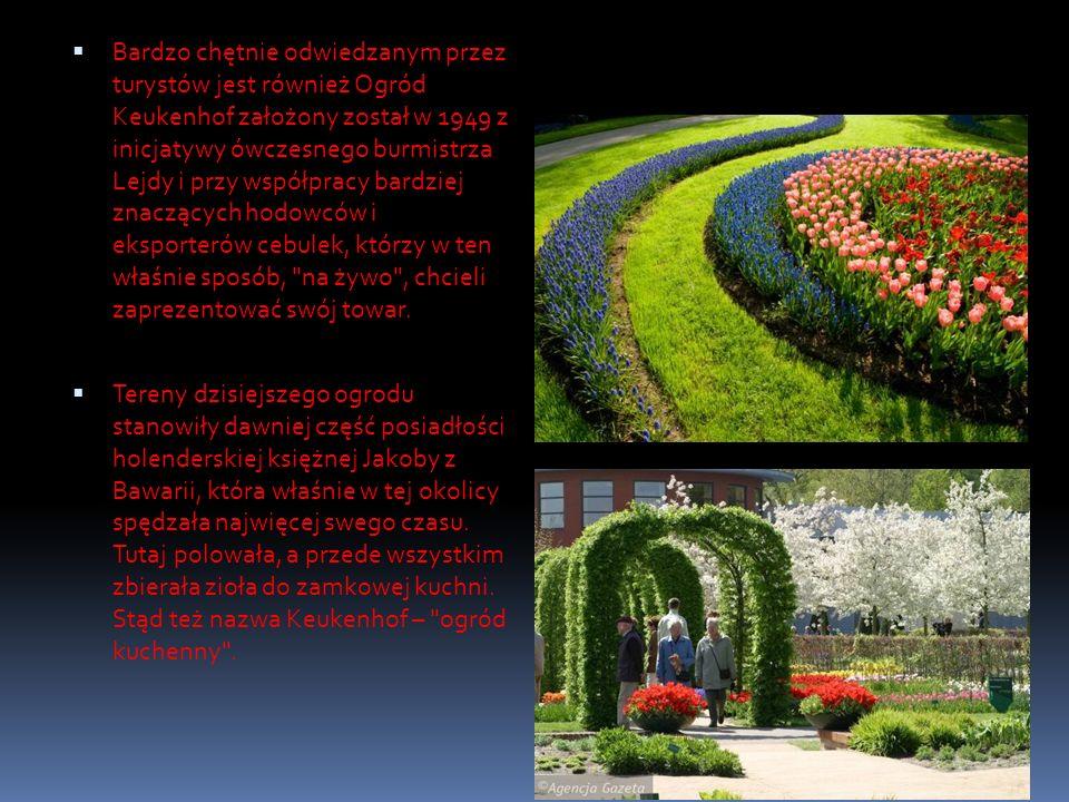 Bardzo chętnie odwiedzanym przez turystów jest również Ogród Keukenhof założony został w 1949 z inicjatywy ówczesnego burmistrza Lejdy i przy współpra