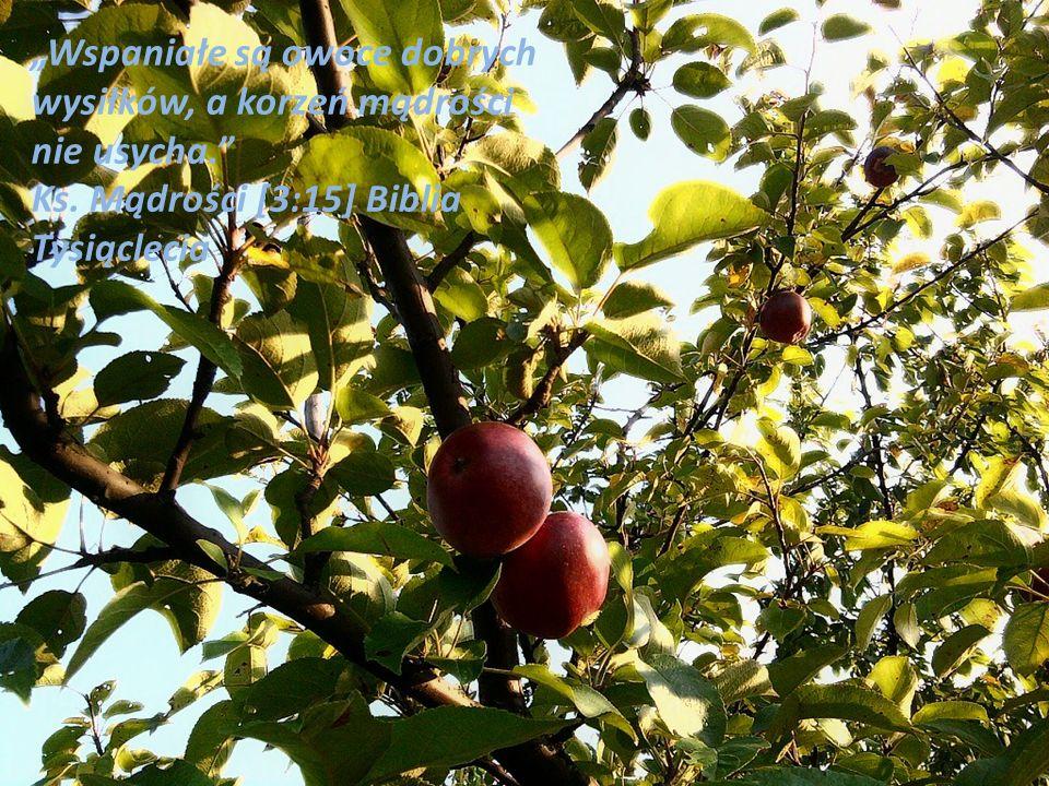 Wspaniałe są owoce dobrych wysiłków, a korzeń mądrości nie usycha. Ks. Mądrości [3:15] Biblia Tysiąclecia