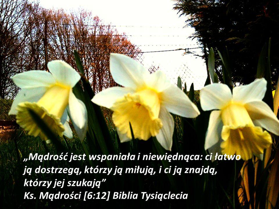 Mądrość jest wspaniała i niewiędnąca: ci łatwo ją dostrzegą, którzy ją miłują, i ci ją znajdą, którzy jej szukają Ks. Mądrości [6:12] Biblia Tysiąclec