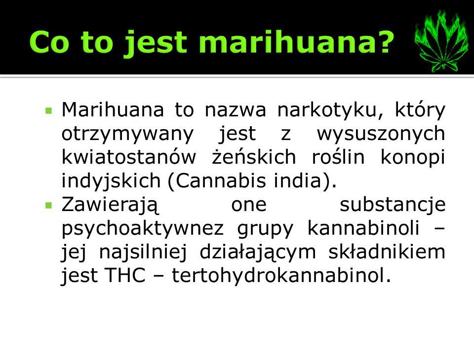 Marihuana to nazwa narkotyku, który otrzymywany jest z wysuszonych kwiatostanów żeńskich roślin konopi indyjskich (Cannabis india). Zawierają one subs