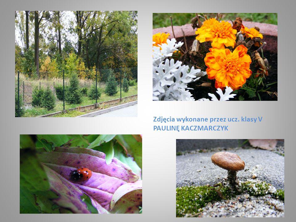 Zdjęcia wykonane przez ucz. klasy V PAULINĘ KACZMARCZYK
