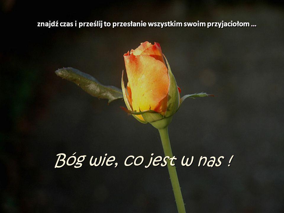 Życzę miłego dnia i nie zapominajcie kosztować woni i piękna kwiatów na Waszej stronie ścieżki. Także Wam, moi przyjaciele z jakimś pęknięciem w dzban