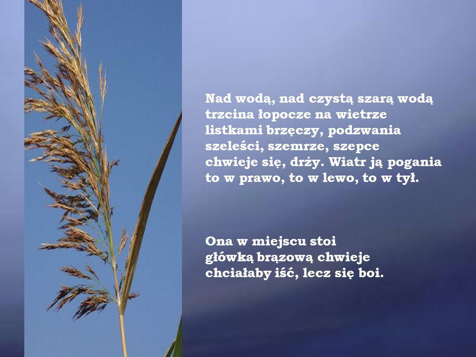 Wiatr ją tarmosi, szaleje.Idź – szepce – idź, rozwieję przed tobą głąb wody.