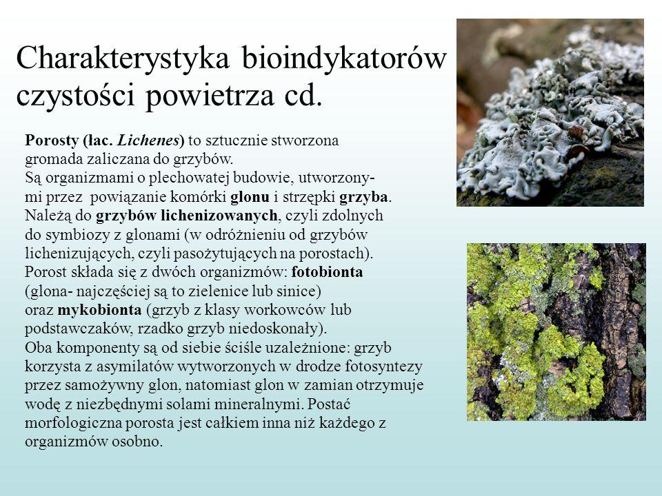 Porosty (łac. Lichenes) to sztucznie stworzona gromada zaliczana do grzybów. Są organizmami o plechowatej budowie, utworzony- mi przez powiązanie komó