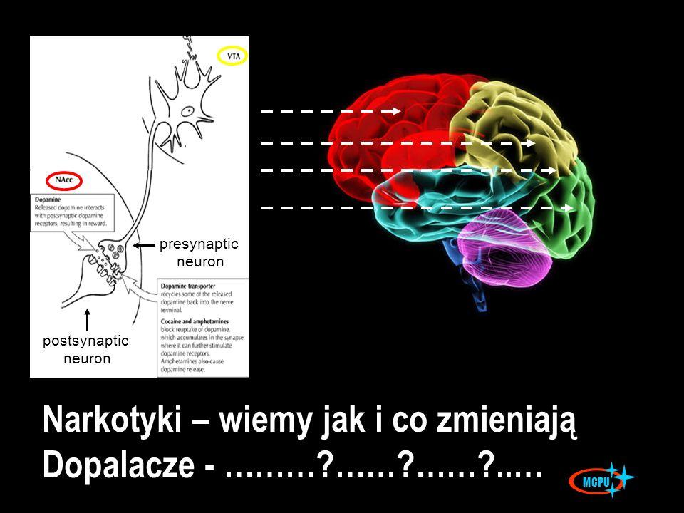 postsynaptic neuron presynaptic neuron Narkotyki – wiemy jak i co zmieniają Dopalacze - ………?……?……?..… MCPU