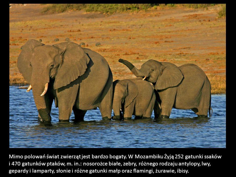 Mimo polowań świat zwierząt jest bardzo bogaty. W Mozambiku Żyją 252 gatunki ssaków i 470 gatunków ptaków, m. in.: nosorożce białe, zebry, różnego rod