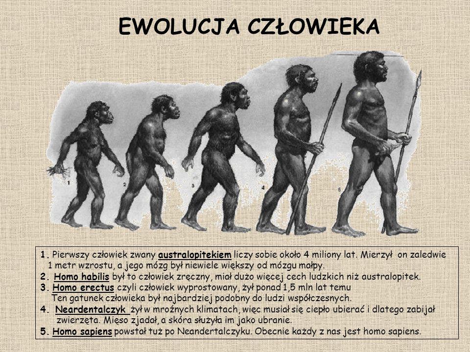1. Pierwszy człowiek zwany australopitekiem liczy sobie około 4 miliony lat. Mierzył on zaledwie 1 metr wzrostu, a jego mózg był niewiele większy od m