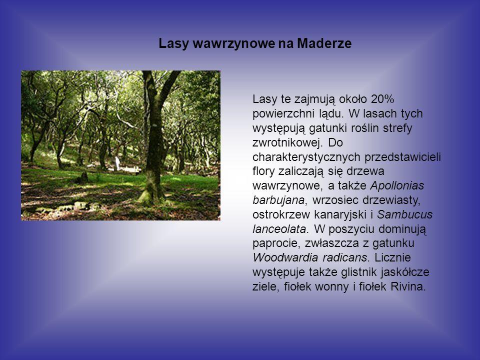 Lasy wawrzynowe na Maderze Lasy te zajmują około 20% powierzchni lądu. W lasach tych występują gatunki roślin strefy zwrotnikowej. Do charakterystyczn