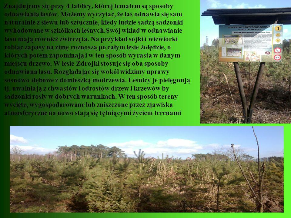 Znajdujemy się przy 4 tablicy, której tematem są sposoby odnawiania lasów. Możemy wyczytać, że las odnawia się sam naturalnie z siewu lub sztucznie, k