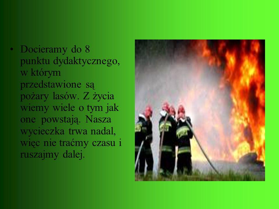 Docieramy do 8 punktu dydaktycznego, w którym przedstawione są pożary lasów. Z życia wiemy wiele o tym jak one powstają. Nasza wycieczka trwa nadal, w