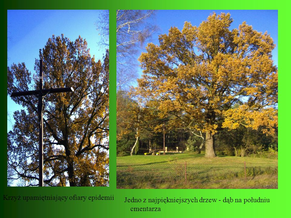 Krzyż upamiętniający ofiary epidemii Jedno z najpiękniejszych drzew - dąb na południu cmentarza