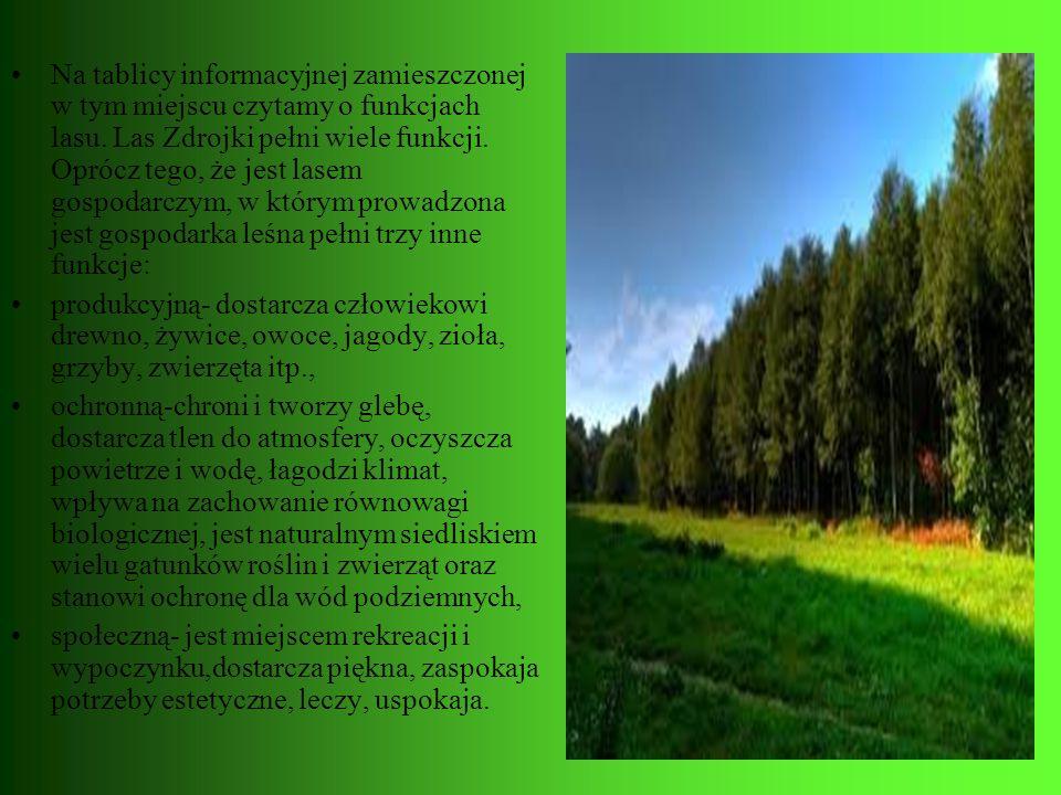 Na tablicy informacyjnej zamieszczonej w tym miejscu czytamy o funkcjach lasu. Las Zdrojki pełni wiele funkcji. Oprócz tego, że jest lasem gospodarczy