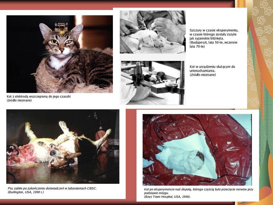 Produkty NIE testowane na zwierzętach: Na TAK: 1.Abercrombie & Fitch 2.