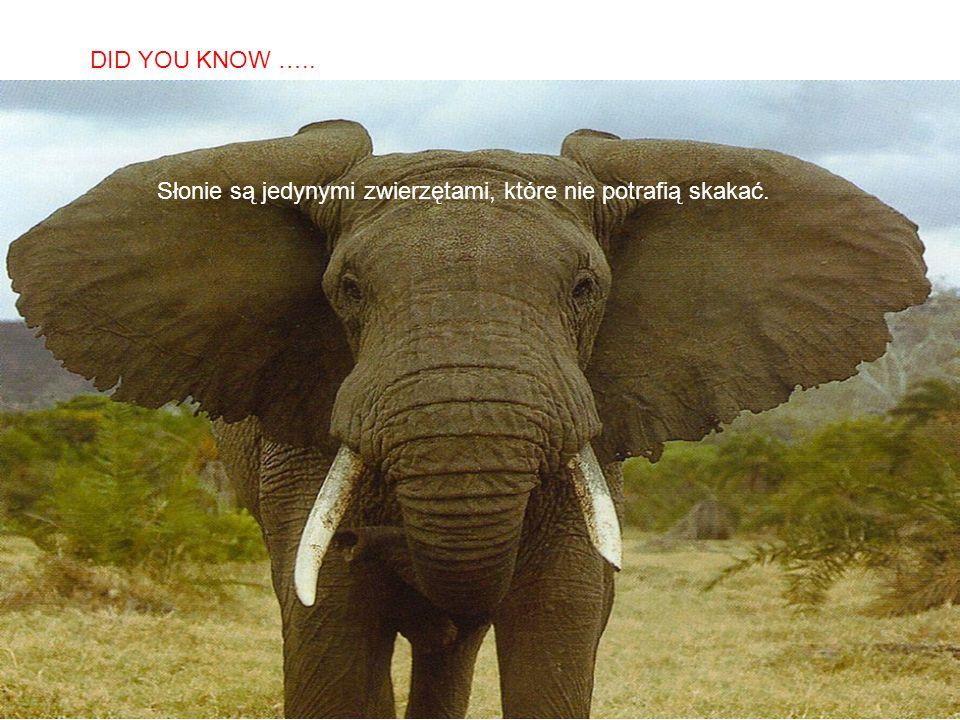 SABIAS QUE… Słonie są jedynymi zwierzętami, które nie potrafią skakać. DID YOU KNOW …..