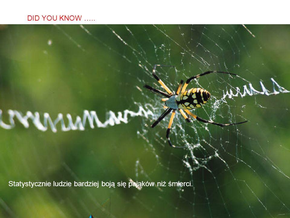 SABIAS QUE… Statystycznie ludzie bardziej boją się pająków niż śmierci. DID YOU KNOW …..