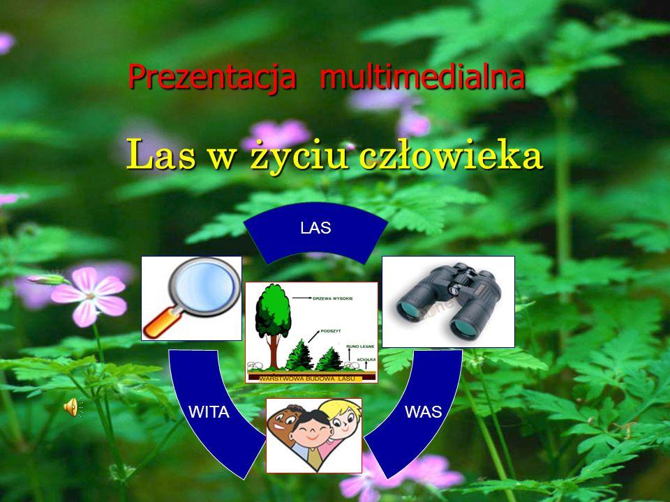 Prezentacja multimedialna Las w życiu człowieka WITA LAS WAS