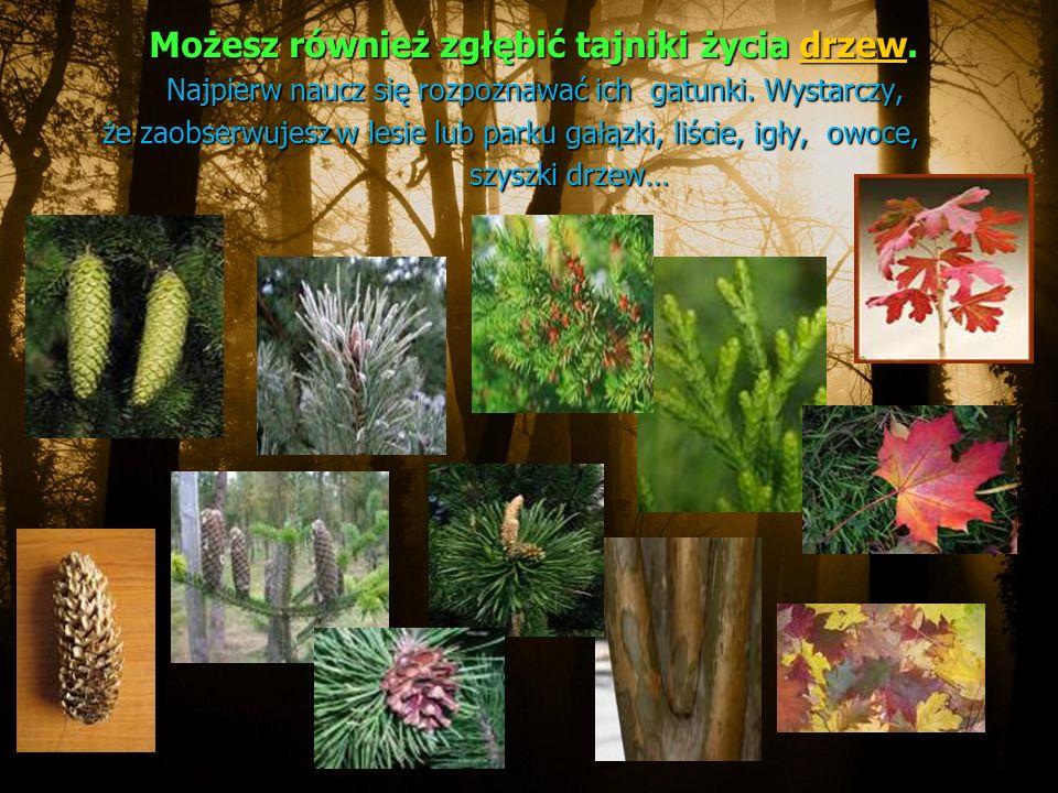Możesz również zgłębić tajniki życia drzew. Możesz również zgłębić tajniki życia drzew.drzew Najpierw naucz się rozpoznawać ich gatunki. Wystarczy, Na