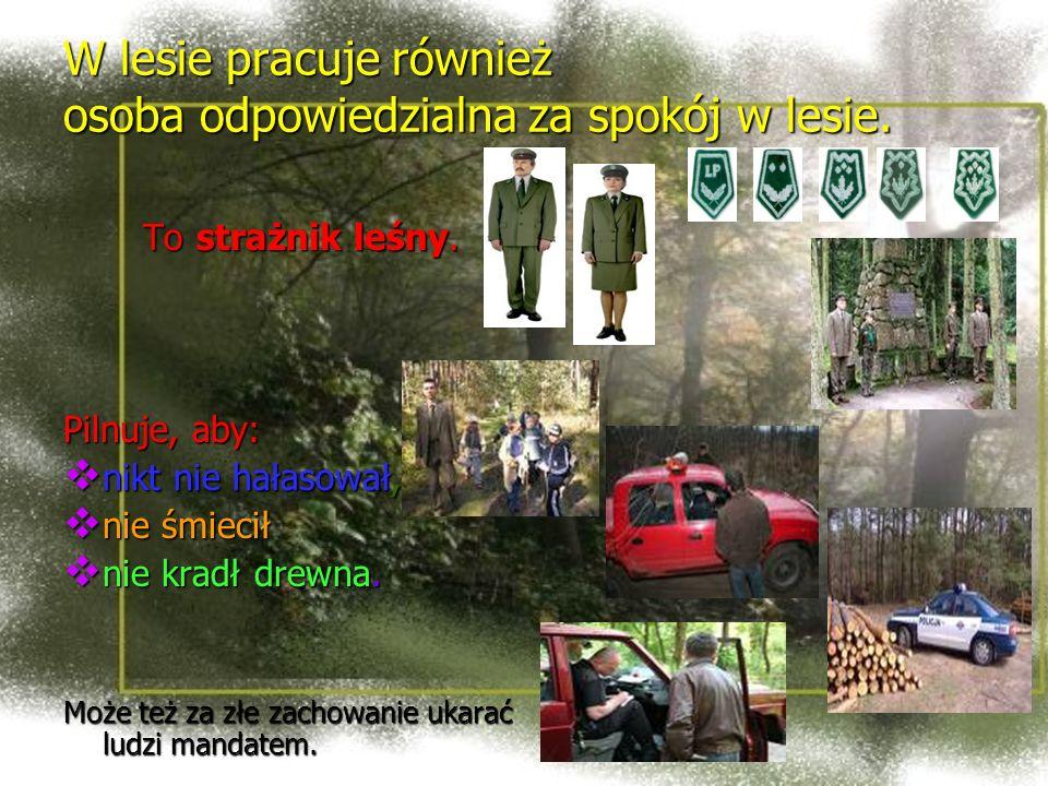 W lesie pracuje również osoba odpowiedzialna za spokój w lesie. To strażnik leśny. Pilnuje, aby: nikt nie hałasował, nie śmiecił nie kradł drewna. Moż