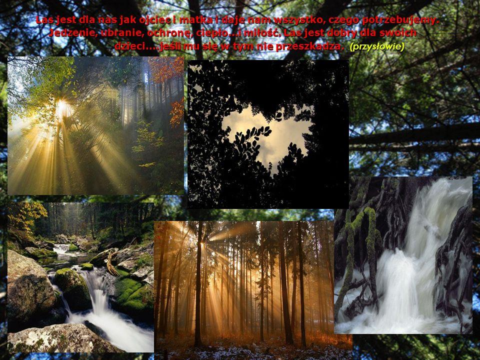 Las jest dla nas jak ojciec i matka i daje nam wszystko, czego potrzebujemy. Jedzenie, ubranie, ochronę, ciepło...i miłość. Las jest dobry dla swoich