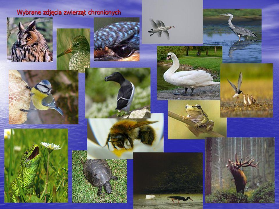 Wybrane zdjęcia zwierząt chronionych