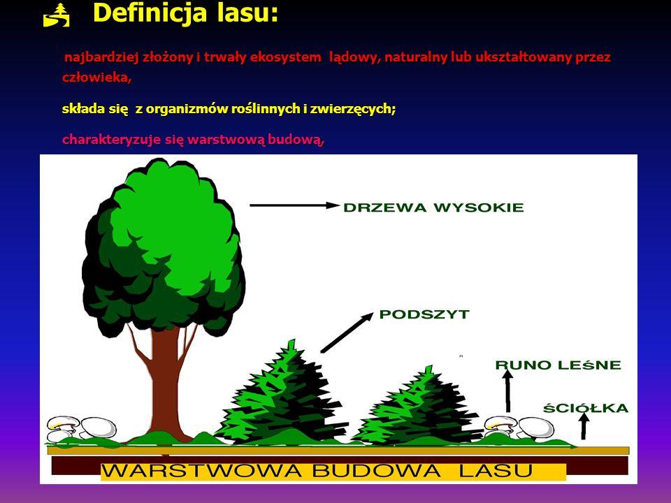 Definicja lasu: najbardziej złożony i trwały ekosystem lądowy, naturalny lub ukształtowany przez człowieka, składa się z organizmów roślinnych i zwier