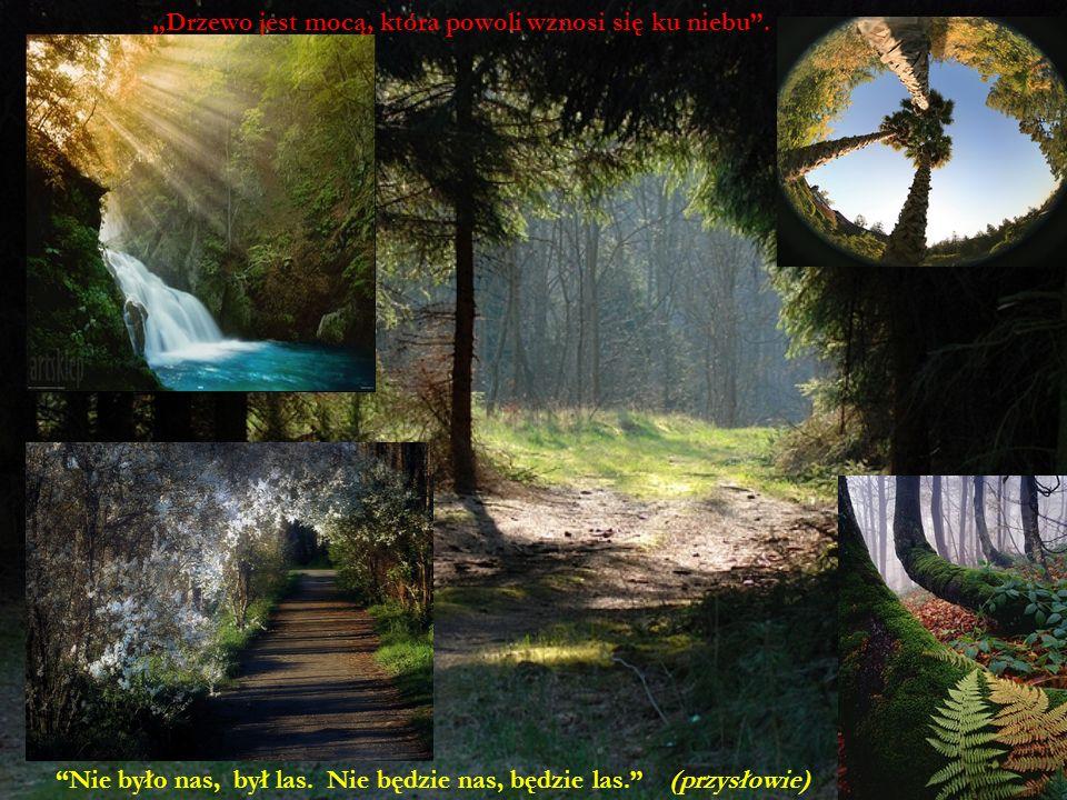 Nie było nas, był las. Nie będzie nas, będzie las. (przysłowie) Drzewo jest mocą, która powoli wznosi się ku niebu.