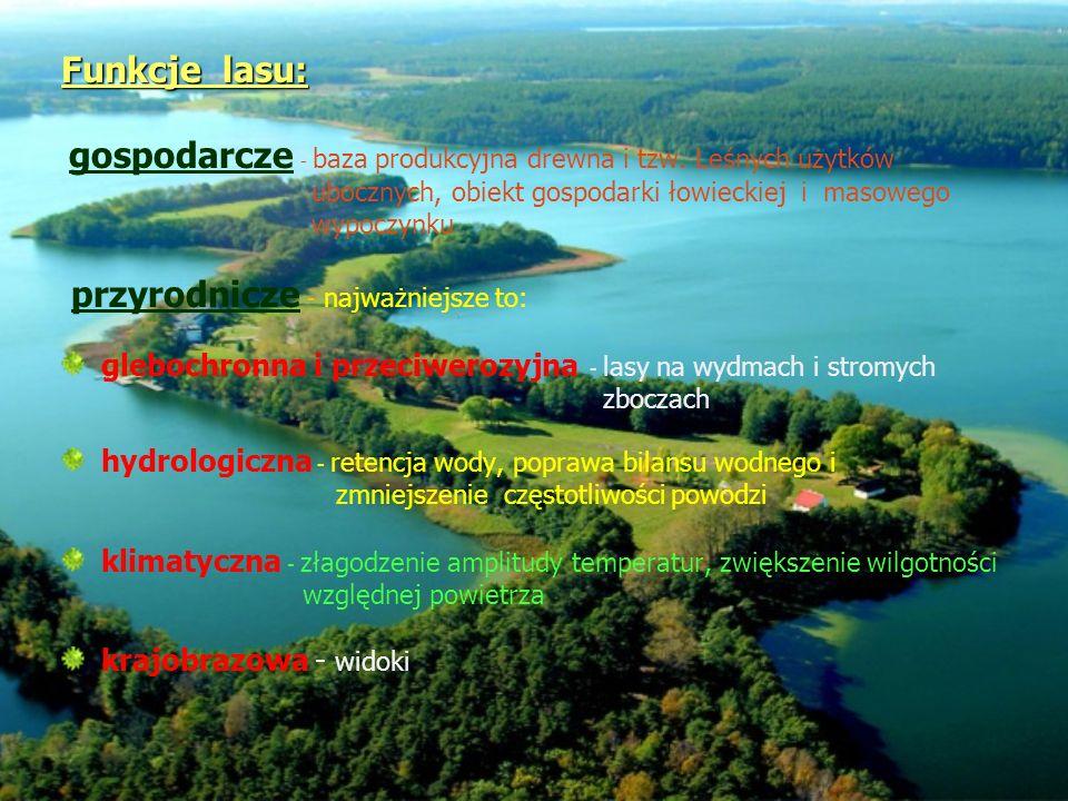 Funkcje lasu: Funkcje lasu: gospodarcze - baza produkcyjna drewna i tzw. Leśnych użytków ubocznych, obiekt gospodarki łowieckiej i masowego wypoczynku