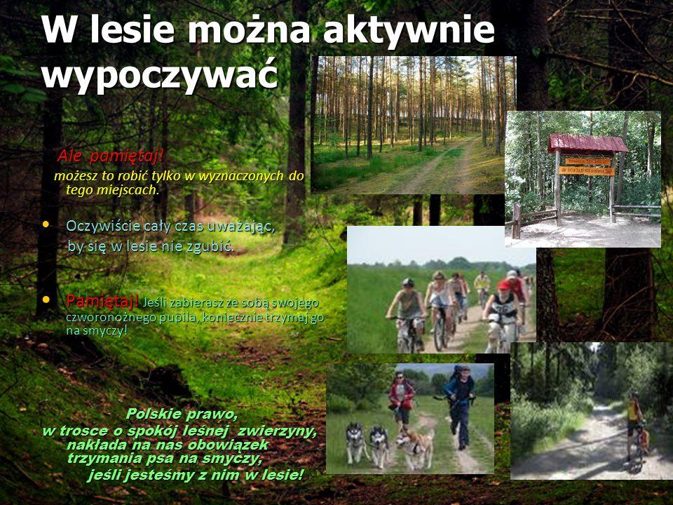 W lesie można aktywnie wypoczywać W lesie można aktywnie wypoczywać Ale pamiętaj! Ale pamiętaj! możesz to robić tylko w wyznaczonych do tego miejscach