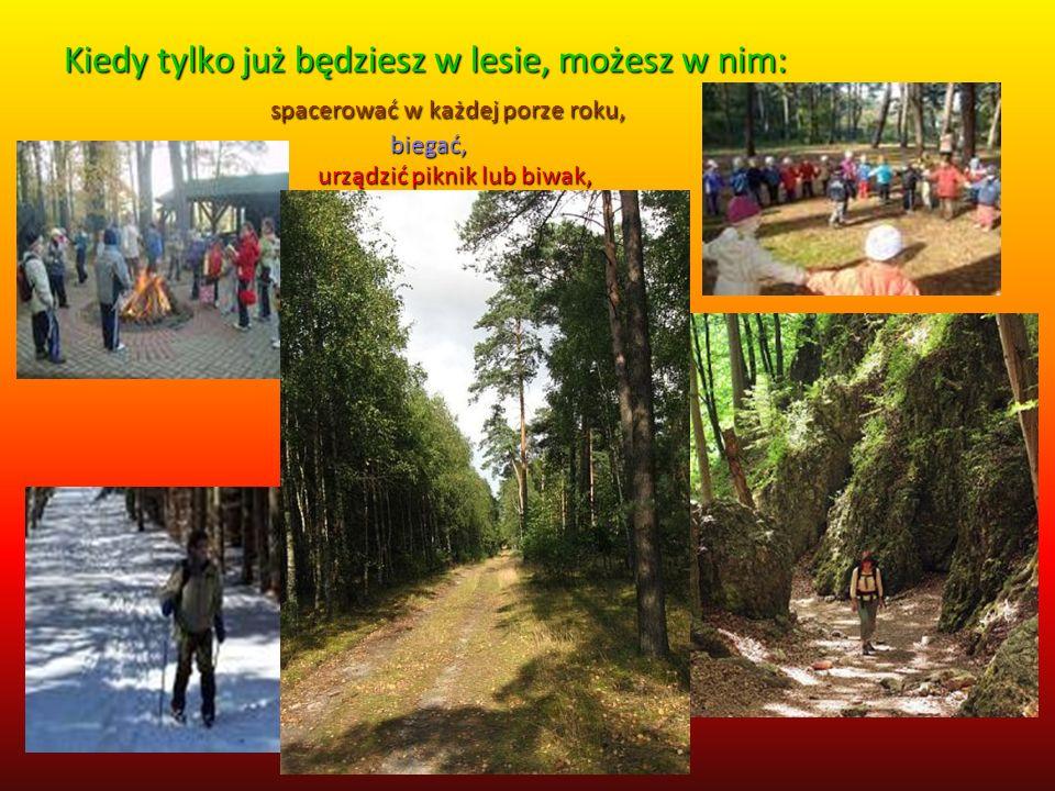W lesie można aktywnie wypoczywać W lesie można wypoczywać.