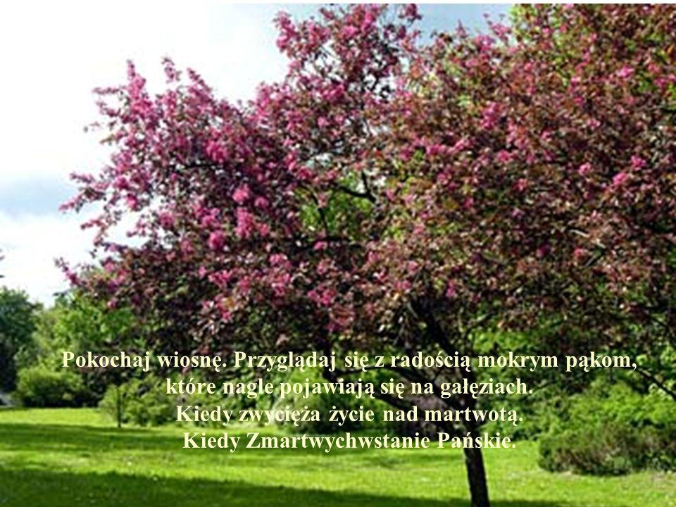 Pokochaj wiosnę. Przyglądaj się z radością mokrym pąkom, które nagle pojawiają się na gałęziach. Kiedy zwycięża życie nad martwotą. Kiedy Zmartwychwst