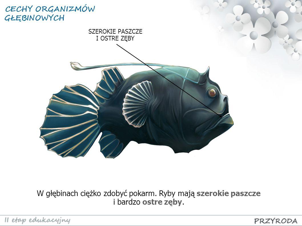 W głębinach ciężko zdobyć pokarm. Ryby mają szerokie paszcze i bardzo ostre zęby. SZEROKIE PASZCZE I OSTRE ZĘBY