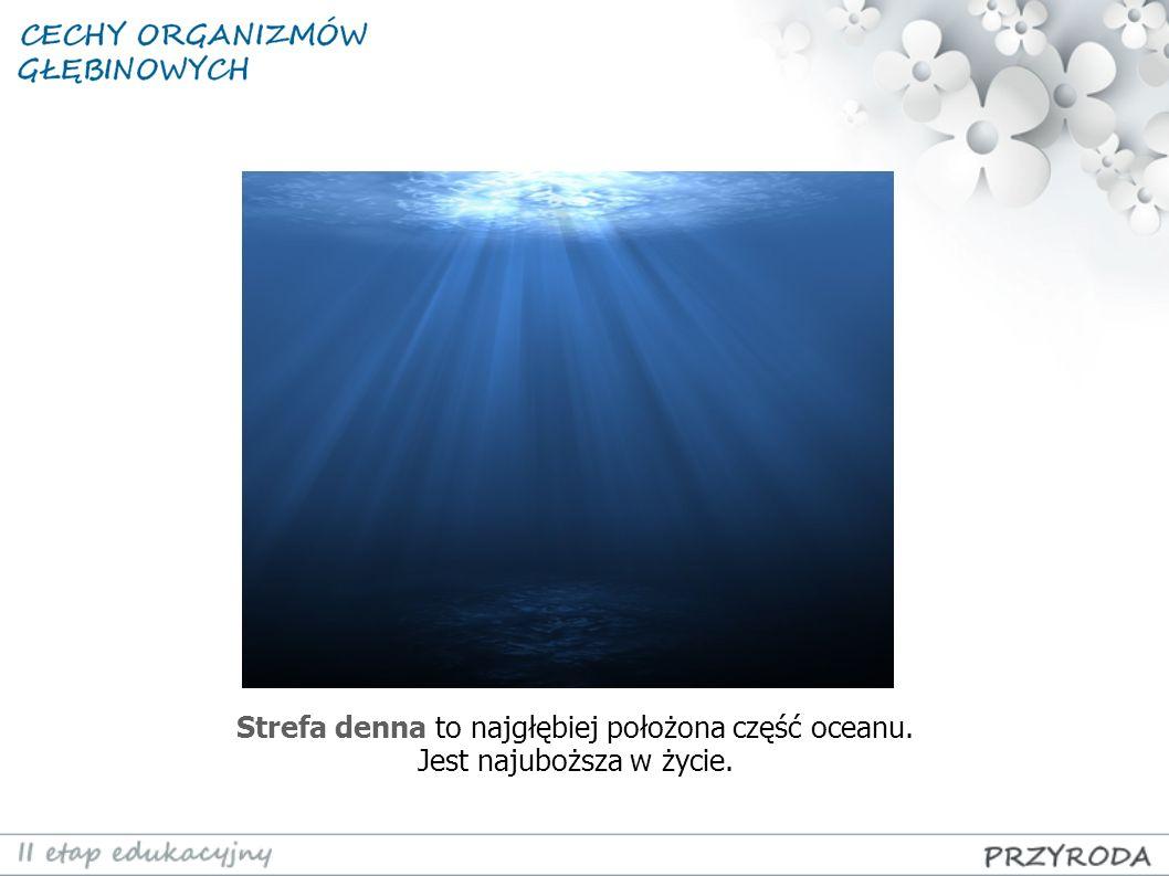 Strefa denna to najgłębiej położona część oceanu. Jest najuboższa w życie.