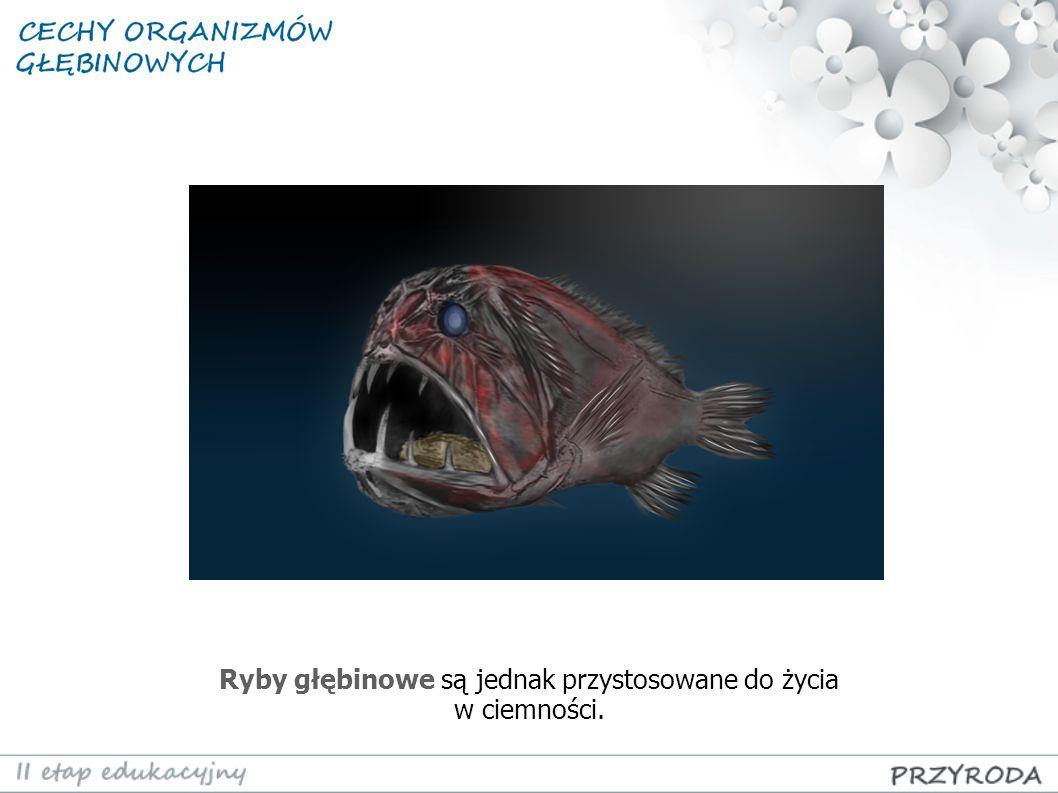 Ryby głębinowe są jednak przystosowane do życia w ciemności.