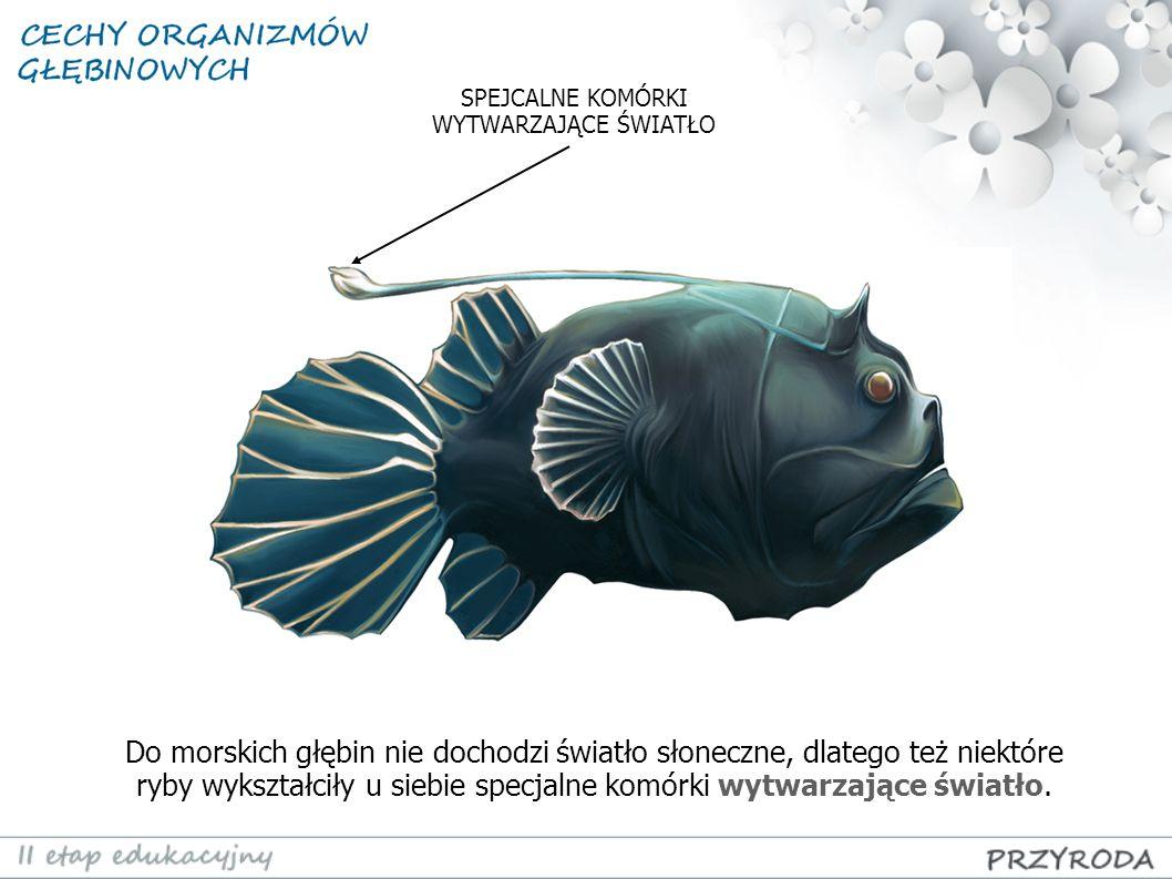 Do morskich głębin nie dochodzi światło słoneczne, dlatego też niektóre ryby wykształciły u siebie specjalne komórki wytwarzające światło. SPEJCALNE K