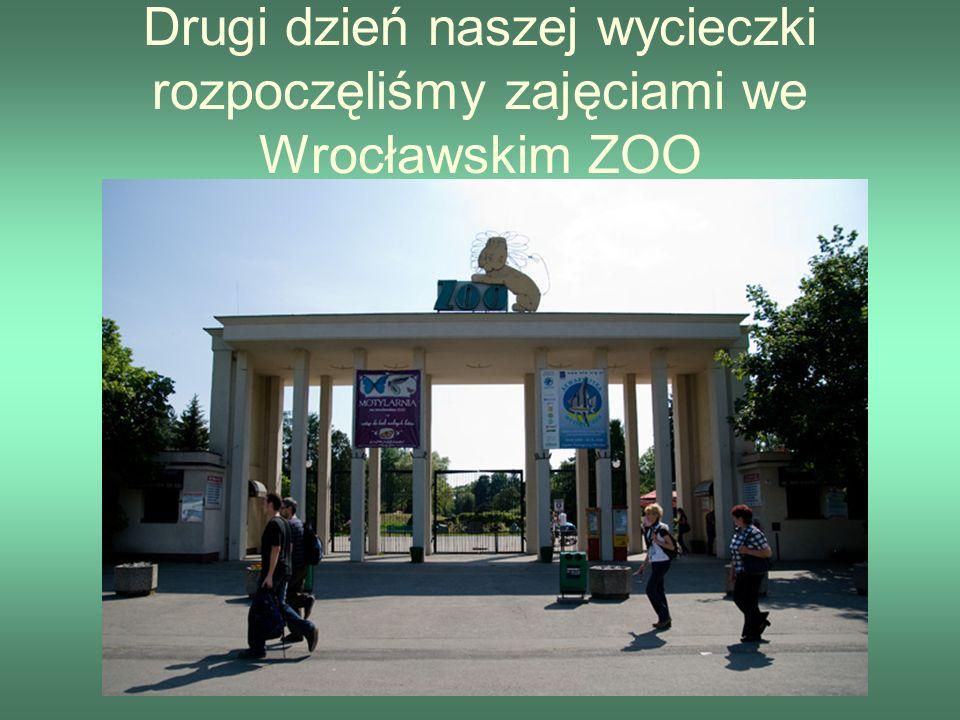Drugi dzień naszej wycieczki rozpoczęliśmy zajęciami we Wrocławskim ZOO