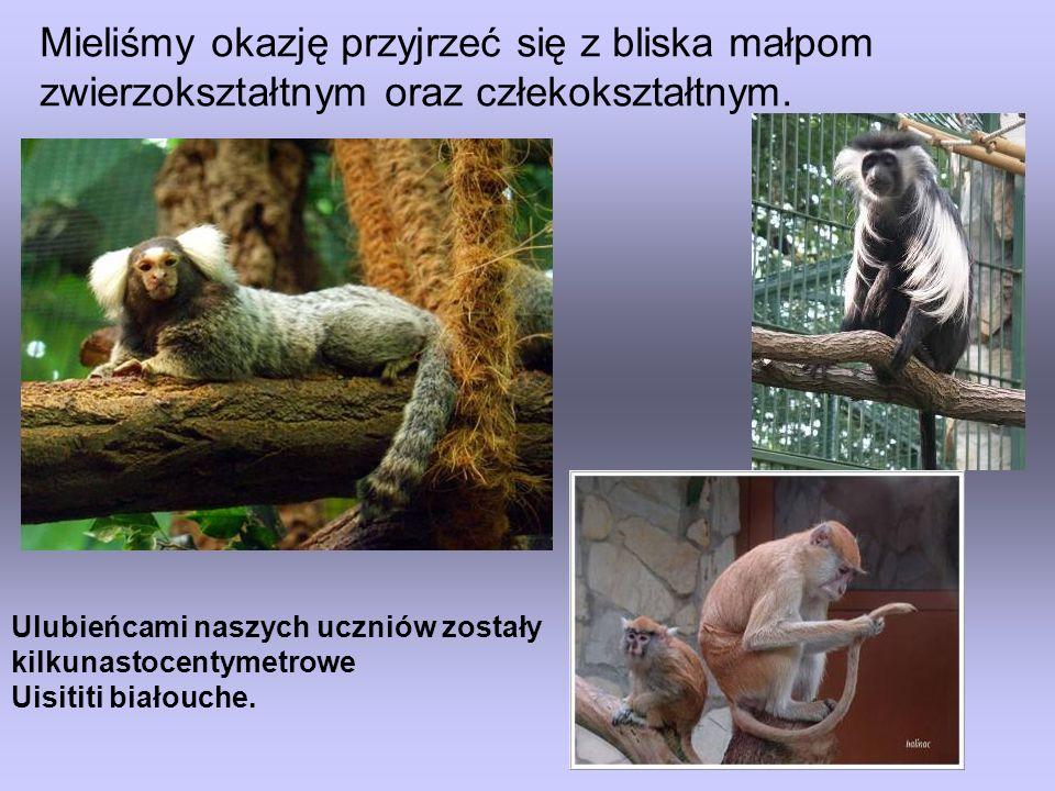 Mieliśmy okazję przyjrzeć się z bliska małpom zwierzokształtnym oraz człekokształtnym.