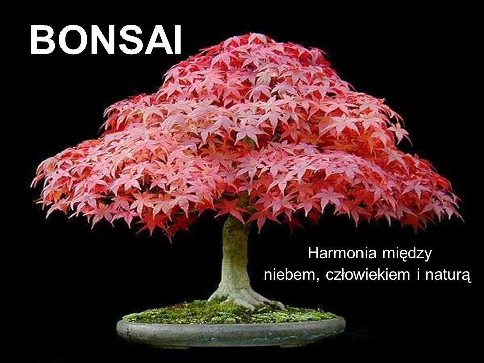 BONSAI Harmonia między niebem, człowiekiem i naturą