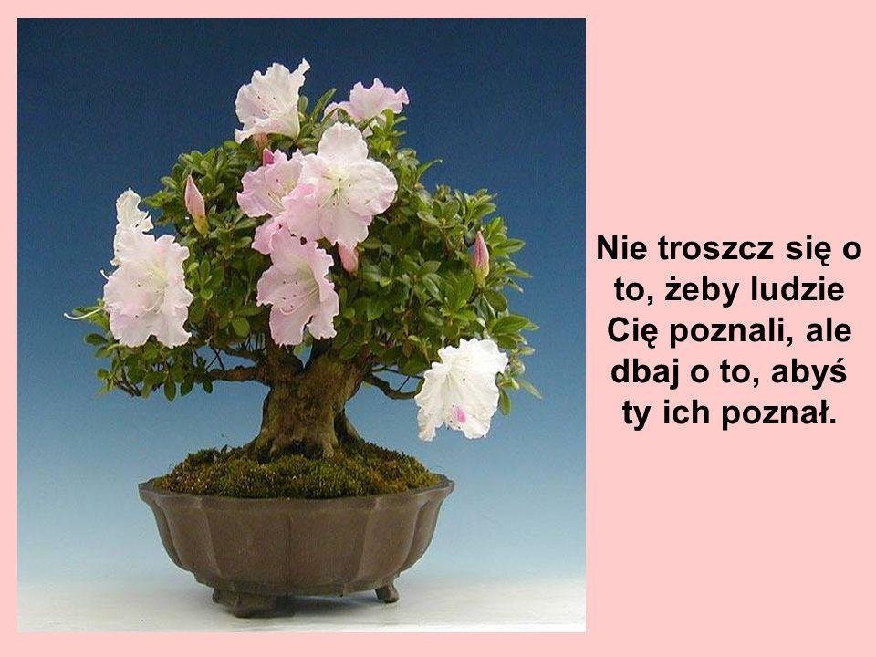 Ktoś szlachetny może cierpieć na brak zdolności, a nie cierpieć, że nikt go nie zna.