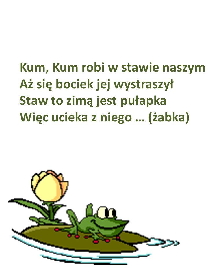 Kum, Kum robi w stawie naszym Aż się bociek jej wystraszył Staw to zimą jest pułapka Więc ucieka z niego … (żabka)