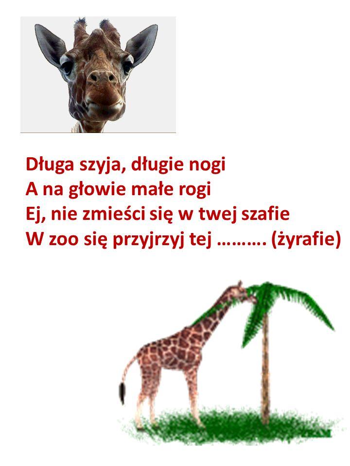 Długa szyja, długie nogi A na głowie małe rogi Ej, nie zmieści się w twej szafie W zoo się przyjrzyj tej ………. (żyrafie)