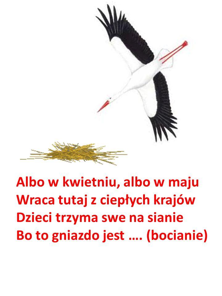 Albo w kwietniu, albo w maju Wraca tutaj z ciepłych krajów Dzieci trzyma swe na sianie Bo to gniazdo jest …. (bocianie)