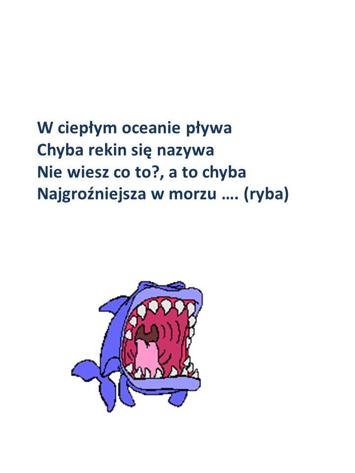 W ciepłym oceanie pływa Chyba rekin się nazywa Nie wiesz co to?, a to chyba Najgroźniejsza w morzu …. (ryba)