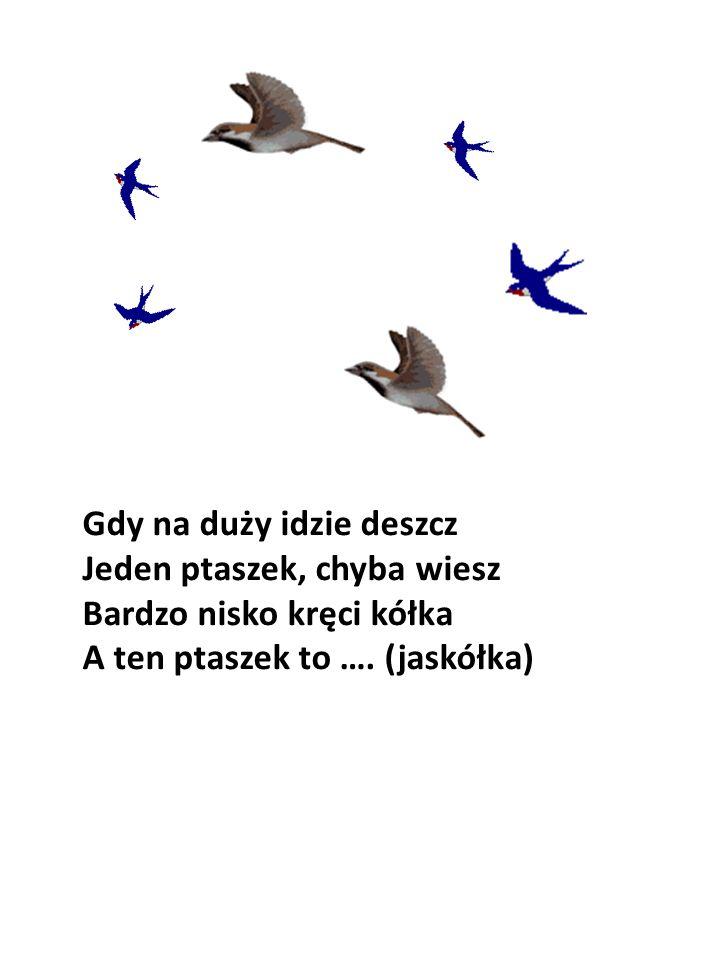 Gdy na duży idzie deszcz Jeden ptaszek, chyba wiesz Bardzo nisko kręci kółka A ten ptaszek to …. (jaskółka)