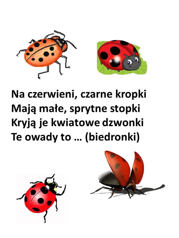 Na czerwieni, czarne kropki Mają małe, sprytne stopki Kryją je kwiatowe dzwonki Te owady to … (biedronki)