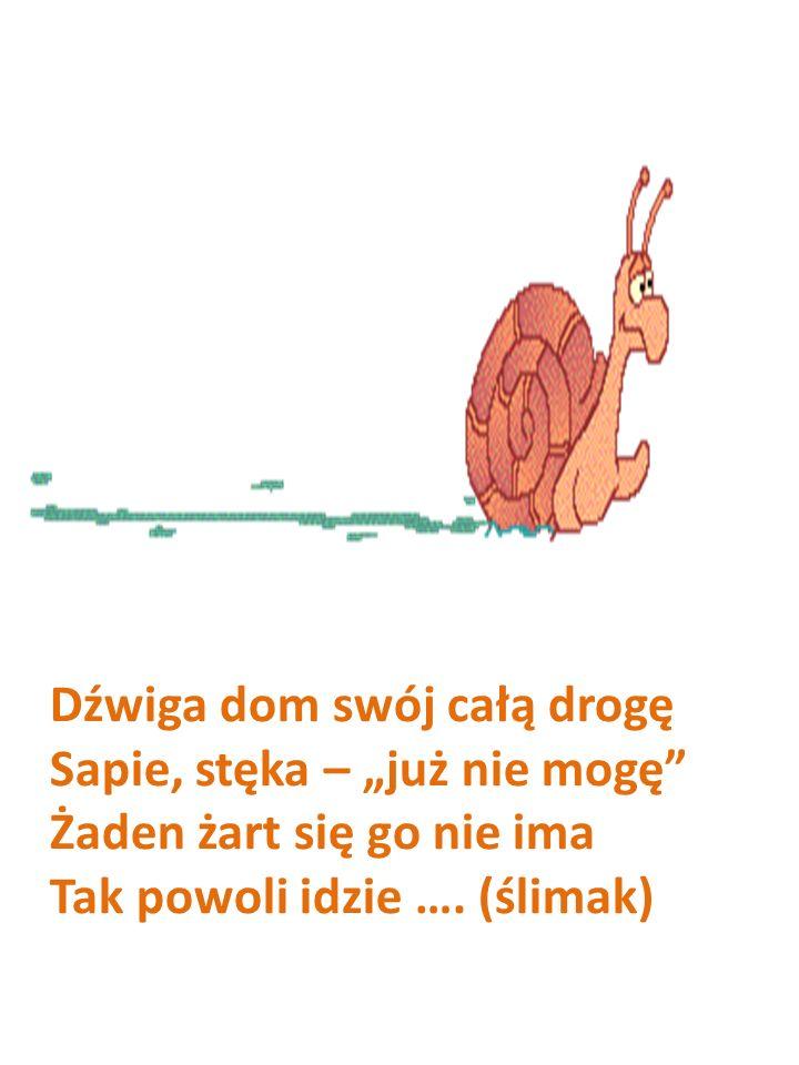 Dźwiga dom swój całą drogę Sapie, stęka – już nie mogę Żaden żart się go nie ima Tak powoli idzie …. (ślimak)