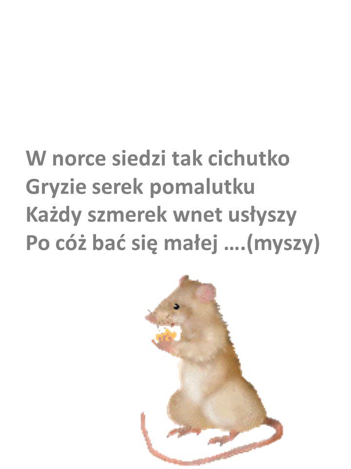 W norce siedzi tak cichutko Gryzie serek pomalutku Każdy szmerek wnet usłyszy Po cóż bać się małej ….(myszy)