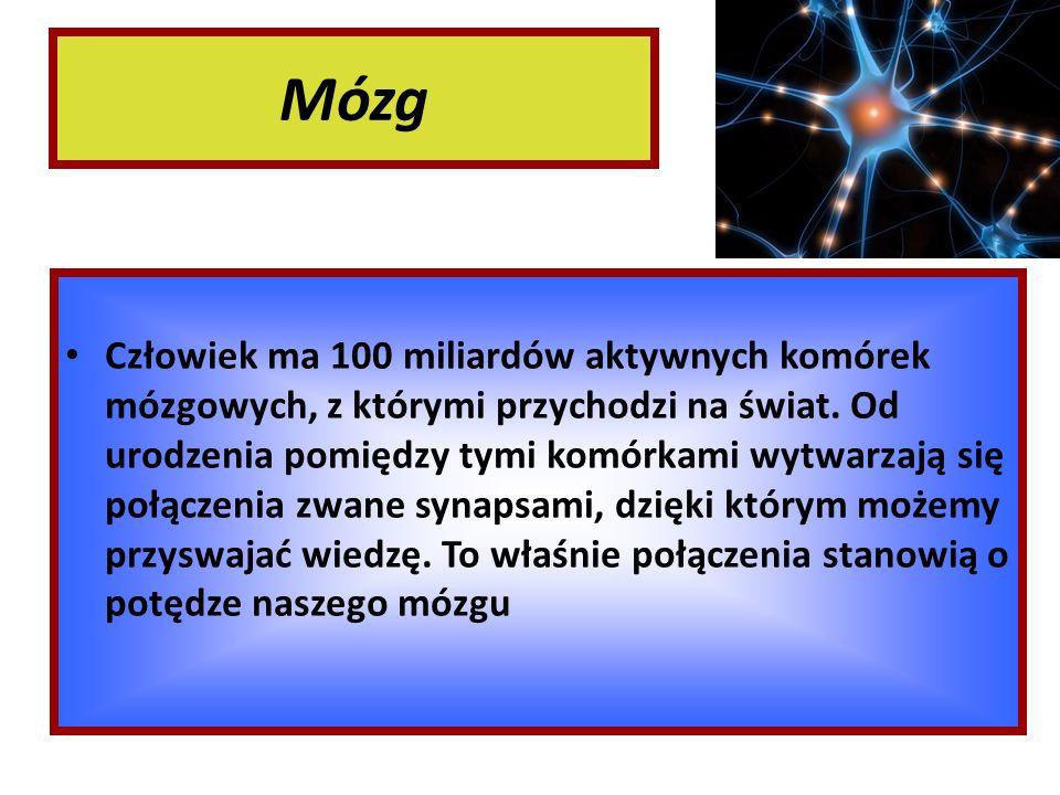 Mózg Człowiek ma 100 miliardów aktywnych komórek mózgowych, z którymi przychodzi na świat. Od urodzenia pomiędzy tymi komórkami wytwarzają się połącze
