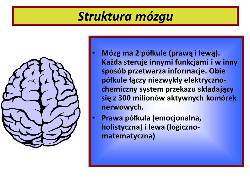 Struktura mózgu Mózg ma 2 półkule (prawą i lewą). Każda steruje innymi funkcjami i w inny sposób przetwarza informacje. Obie półkule łączy niezwykły e
